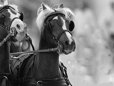 Mostra Nazionale del Cavallo
